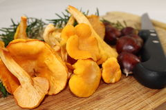 Close up of organic vegan fresh harvested mushrooms chanterelle and chestnuts Royalty Free Stock Image
