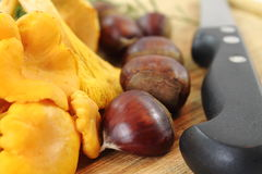 Close up of organic vegan fresh harvested mushrooms chanterelle and chestnuts Stock Photos