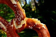 Close Up, Organism, Macro Photography Royalty Free Stock Photography