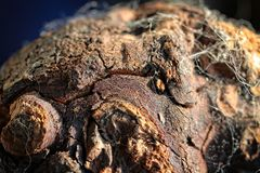 Close Up, Organism, Rock, Reptile Royalty Free Stock Photo