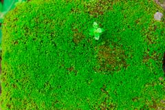 Close-up oude die Steen met Groen Mos in bos voor backgr wordt overwoekerd Stock Foto
