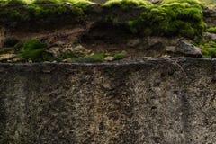 Close-up oude steen met groen mos Grijze steen met de groene achtergrond van de mostextuur stock afbeelding