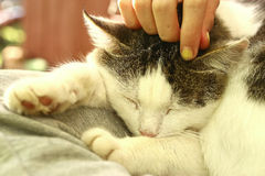 Close up outdoor photo of the cat on lap stroke. With hand and fingers Stock Photo