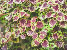 Close up of outdoor plants. In a garden stock images