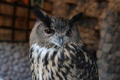 Close-up owl in rock castle atmosphere Stock Image