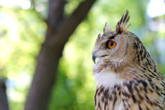 Close-up of owl on a tree in a forest Royalty Free Stock Images