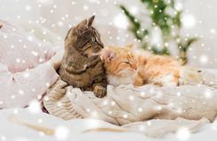 Close up of owner with cats in bed over snow royalty free stock photos