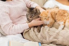 Close up of owner with red and tabby cat in bed stock image