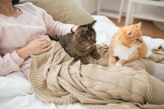 Close up of owner with red and tabby cat in bed royalty free stock image