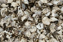 Close up of oyster shells stock images