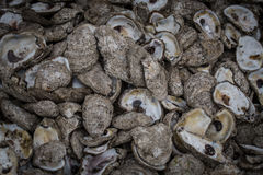 Close up of Oyster Shells Stock Photo