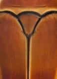 Close-up of Pachnoda marginata Royalty Free Stock Images