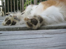 Close-up of pads on feet of a hairy dog. A close-up of a long haired dog`s hind legs and pads on its feet on a wooden deck Stock Photography