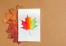 Drawing maple leaf with watercolors royalty free stock images