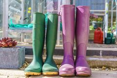 Close up of a pair of purple and green Wellington Boots Royalty Free Stock Image