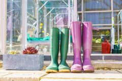Close up of a pair of purple and green Wellington Boots Stock Photography
