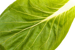 Close up of pak choi (Brassica rapa) leaf. Close up of fresh green pak choi (Brassica rapa) leaf with veins Royalty Free Stock Images