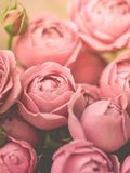Close-up pale peony roses. Selective focus, magic light, pastel colors royalty free stock images