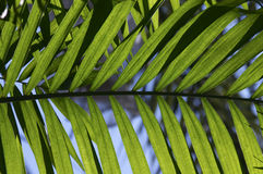Close up of Palm Stock Photography