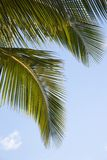 Close up of palm frond. Stock Photo