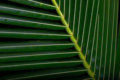 Close up of a palm frond Stock Images