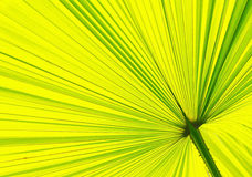 Close up of a palm leaf pattern2 Royalty Free Stock Photography