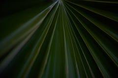 Close-Up Palm 1 royalty free stock photos