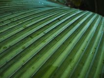 Close up Palm texture Royalty Free Stock Images