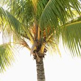Close-up of palm tree. Royalty Free Stock Photography