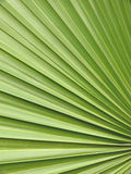 Close Up of a Palm Tree Royalty Free Stock Image