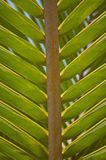 Close up of Palm tree. Up close shot of a palm branch or frond stock photography