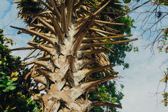 Close up of Palm tree Stock Image