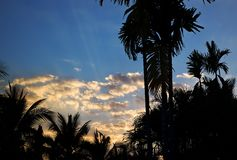 Closeup palm tree on the background of clouds sky at sunset Royalty Free Stock Images