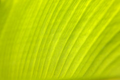 Close-up of a palm tree leaf. Pattern and structure shining through Stock Images