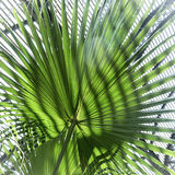 Close up of a palm tree leaf Stock Photo