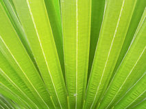 Close-up of palm tree leaf Stock Images