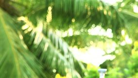Close-up palm tree leaves blur, Tropical abstract background. Tropical abstract background, close-up palm tree leaves blur stock footage