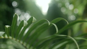Close-up of palm tree leaves in the garden. stock video