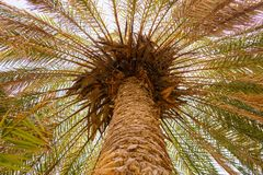 Close up from a palm tree royalty free stock photography