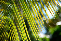 Close up of a palm tree Stock Photography