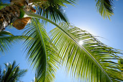 Close up of a palm tree Royalty Free Stock Photo