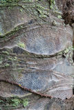 Close up of palm tree trunk bark surface Stock Photo