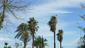 Close up of palm trees against the sky swaying in the wind in daylight. Black bird flying over palm trees, black bird sits on a palm tree stock video footage