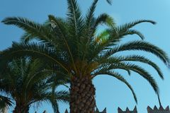 Close up of palm trees at tropical coast on the blue sky background.  Royalty Free Stock Photo