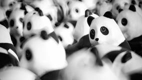 Close up of Panda dolls Stock Photo