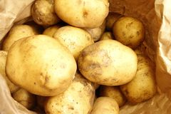 Close up on a paper bag filled with potatoes stock photo