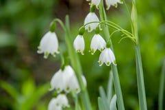 Close up para florescer a flor no mundo da planta imagens de stock royalty free