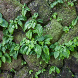 Close up parasite plant on stone wall Stock Image