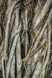 Close-up of parasite tree Royalty Free Stock Photos