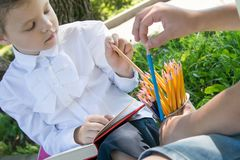 Close-up, in the park, in the fresh air, from a large number of pencils, the students choose a sharpened royalty free stock photo